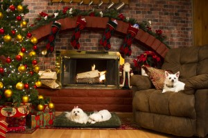The dogs sitting by the fireplace in THE 3 DOGATEERS. ©RLJ Entertainment / Image Entertainment.
