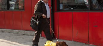 Photos: Solondz Fans Will Relish 'Wiener-Dog'