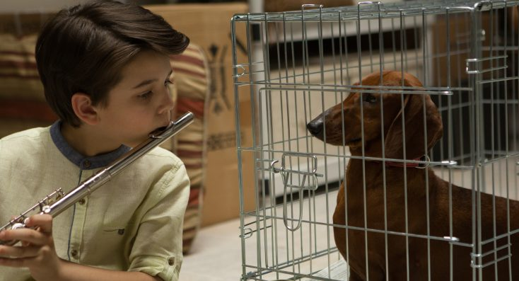 Photos: EXCLUSIVE: Todd Solondz Returns with 'Wiener-Dog'