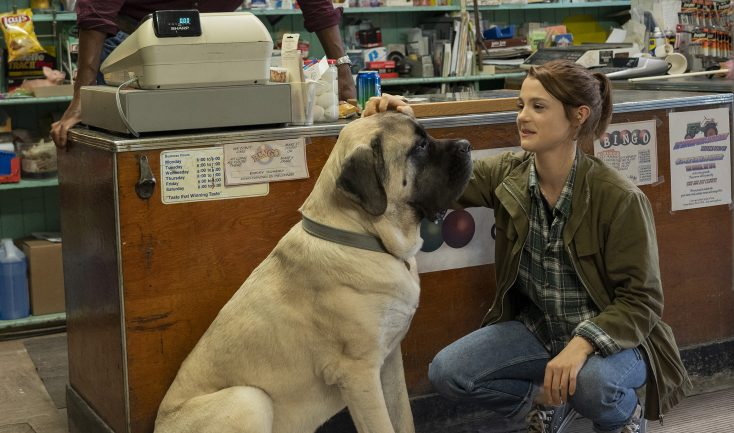 Photos: EXCLUSIVE: 'A Dog's Journey' Actress Says it's High Time for Girl-and-her-Dog Movie